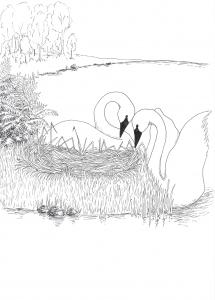 svanenstrumpet2